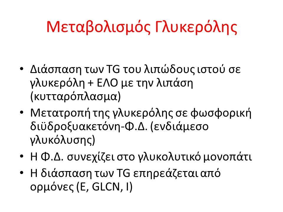 Μεταβολισμός Γλυκερόλης Διάσπαση των TG του λιπώδους ιστού σε γλυκερόλη + ΕΛΟ με την λιπάση (κυτταρόπλασμα) Μετατροπή της γλυκερόλης σε φωσφορική διϋδροξυακετόνη-Φ.Δ.