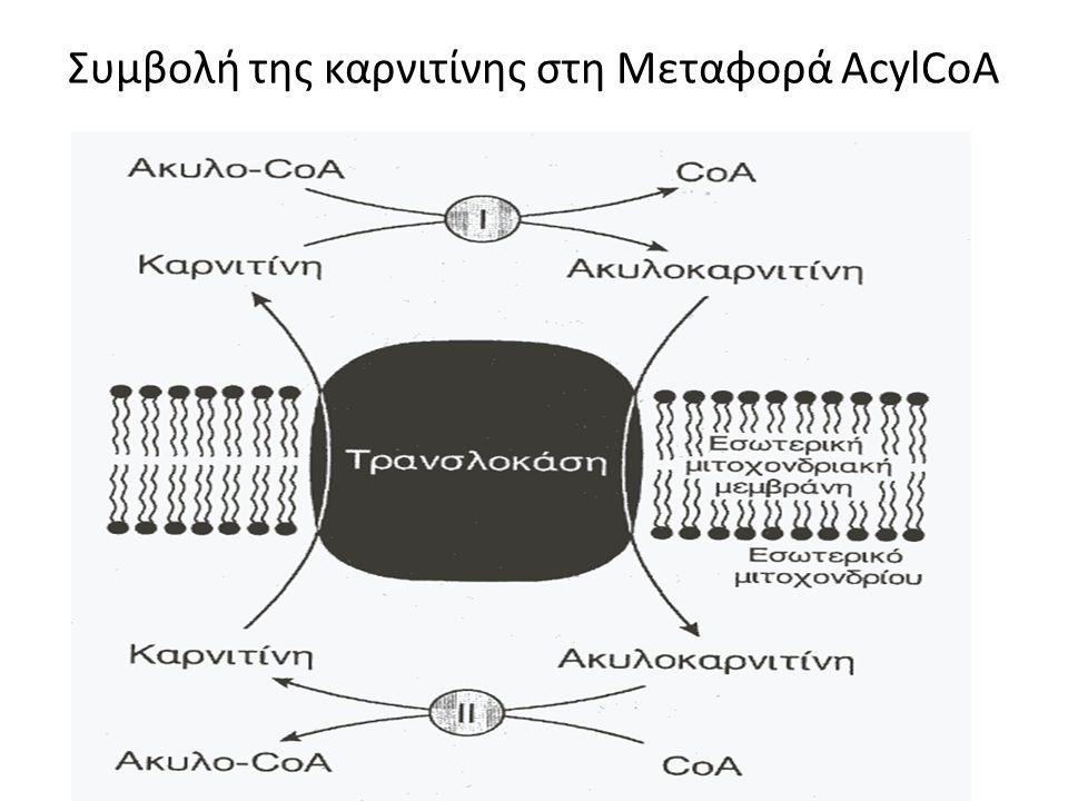 Συμβολή της καρνιτίνης στη Μεταφορά ΑcylCoA