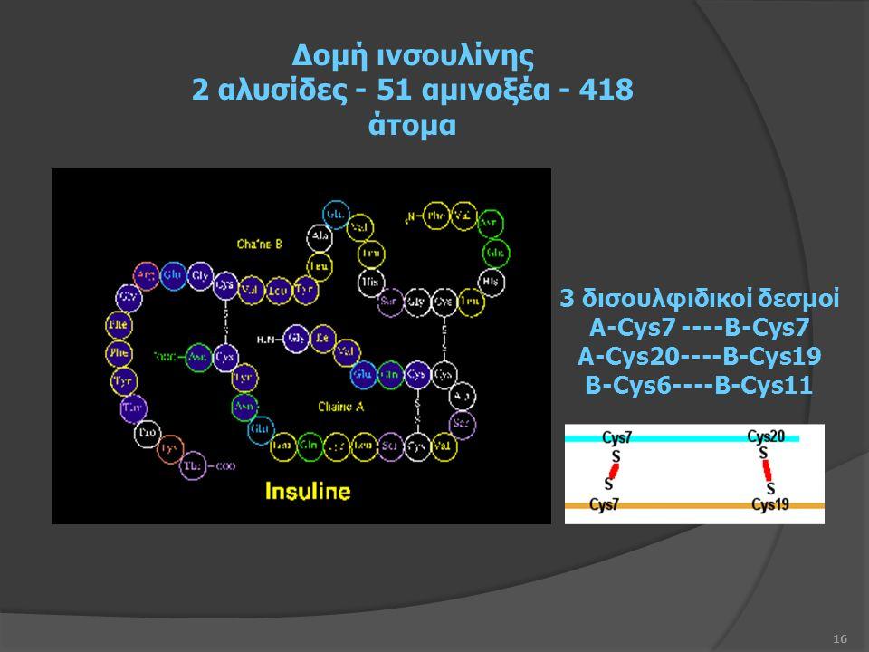 16 Δομή ινσουλίνης 2 αλυσίδες - 51 αμινοξέα - 418 άτομα 3 δισουλφιδικοί δεσμοί A-Cys7 ----B-Cys7 A-Cys20----B-Cys19 B-Cys6----B-Cys11