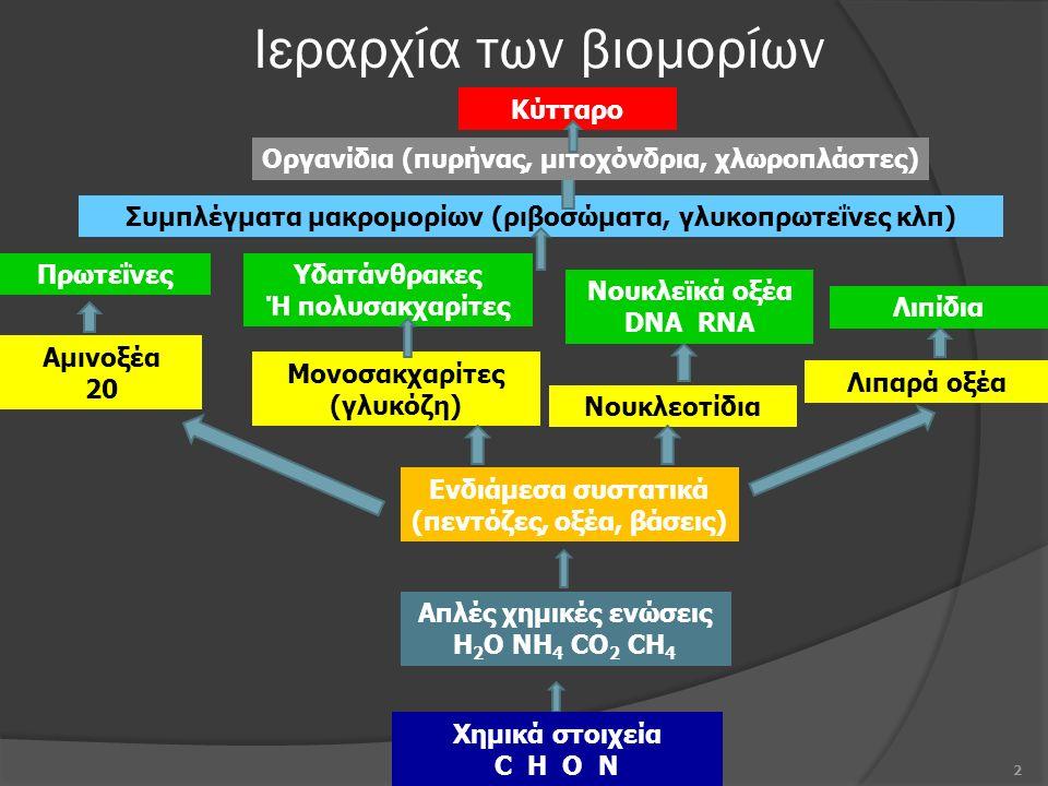 Ιεραρχία των βιομορίων 2 Χημικά στοιχεία C H O N Συμπλέγματα μακρομορίων (ριβοσώματα, γλυκοπρωτεΐνες κλπ) Λιπίδια Νουκλεϊκά οξέα DNA RNA Υδατάνθρακες Ή πολυσακχαρίτες Πρωτεΐνες Λιπαρά οξέα Νουκλεοτίδια Μονοσακχαρίτες (γλυκόζη) Αμινοξέα 20 Ενδιάμεσα συστατικά (πεντόζες, οξέα, βάσεις) Απλές χημικές ενώσεις H 2 O NH 4 CO 2 CH 4 Κύτταρο Οργανίδια (πυρήνας, μιτοχόνδρια, χλωροπλάστες)