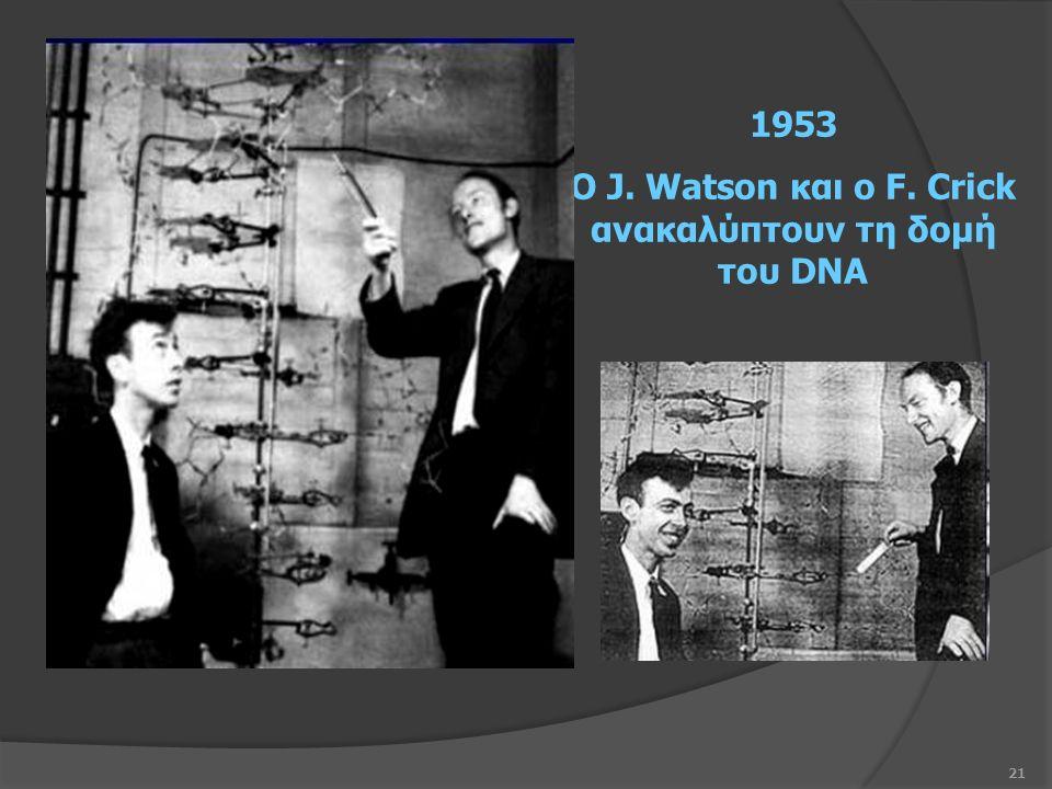 21 1953 Ο J. Watson και ο F. Crick ανακαλύπτουν τη δομή του DNA