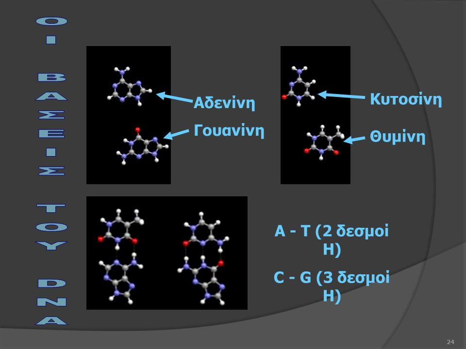 24 Αδενίνη Γουανίνη A - T (2 δεσμοί Η) C - G (3 δεσμοί Η) Κυτοσίνη Θυμίνη