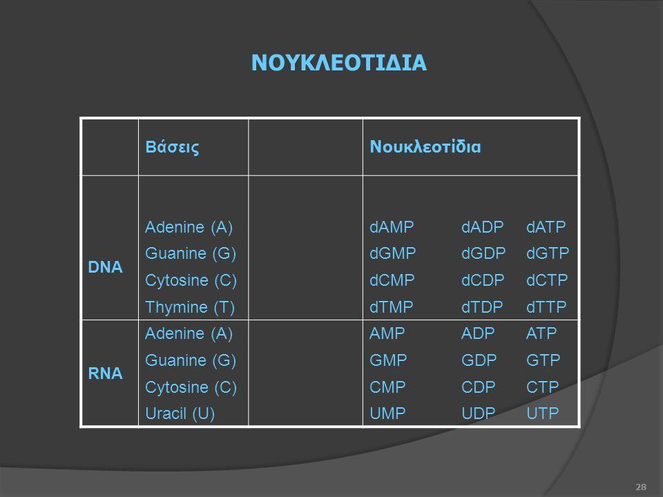 28 Βάσεις Νουκλεοτίδια DNA Adenine (A)dAMPdADPdATP Guanine (G)dGMPdGDPdGTP Cytosine (C)dCMPdCDPdCTP Thymine (T)dTMPdTDPdTTP RNA Adenine (A)AMPADPATP Guanine (G)GMPGDPGTP Cytosine (C)CMPCDPCTP Uracil (U)UMPUDPUTP ΝΟΥΚΛΕΟΤΙΔΙΑ