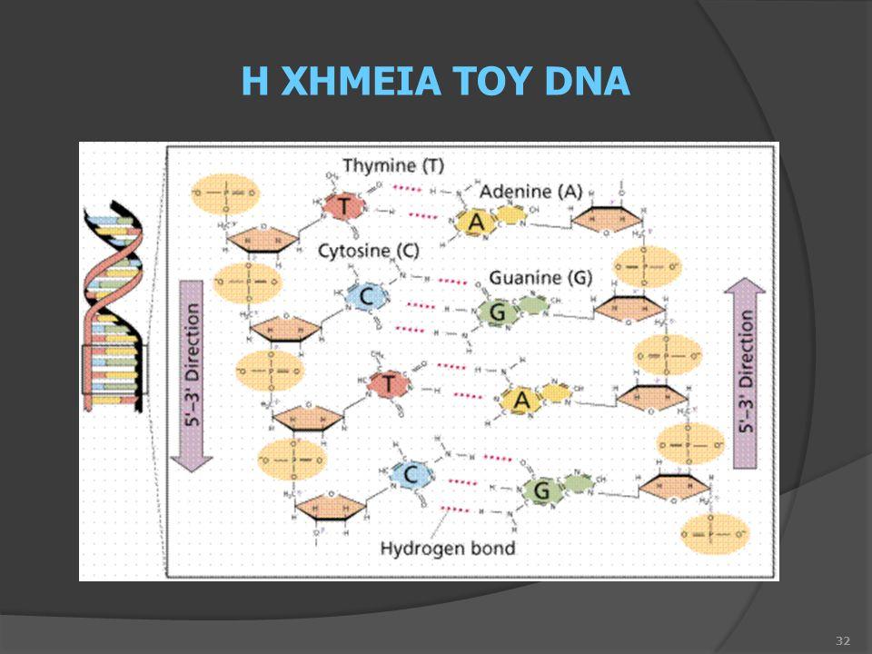 32 Η ΧΗΜΕΙΑ ΤΟΥ DNA
