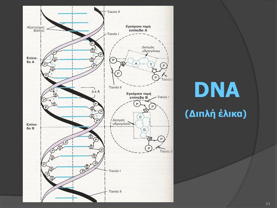 33 DNA (Διπλή έλικα)
