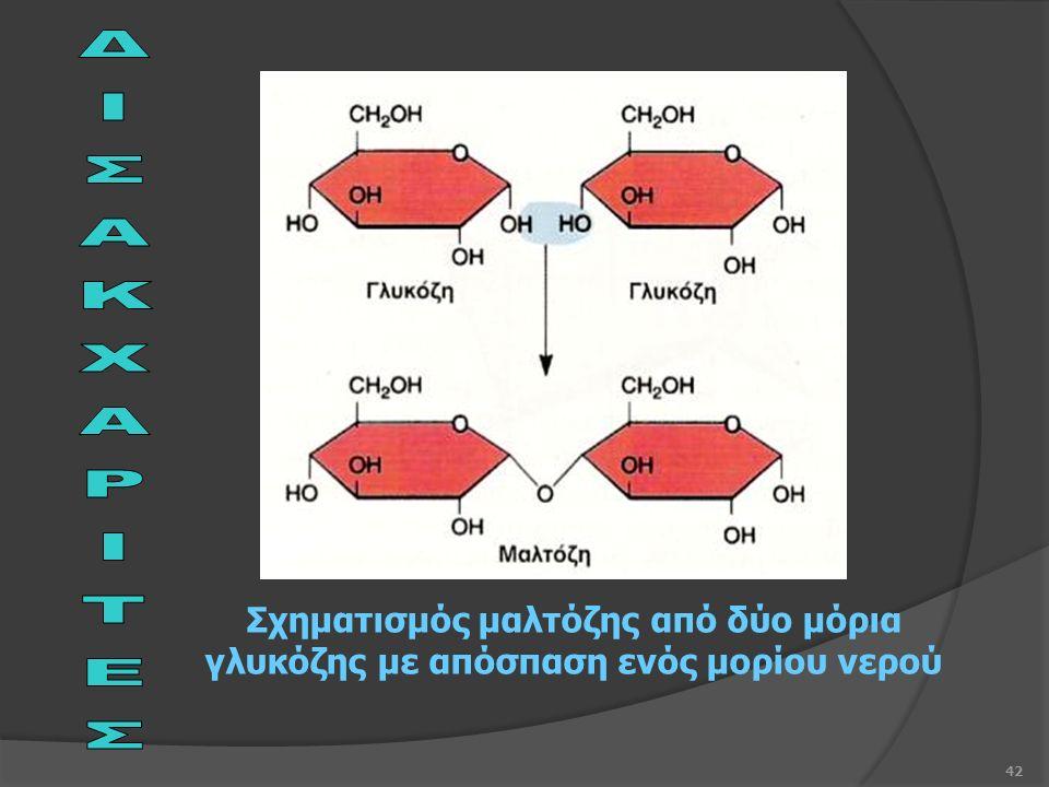 42 Σχηματισμός μαλτόζης από δύο μόρια γλυκόζης με απόσπαση ενός μορίου νερού