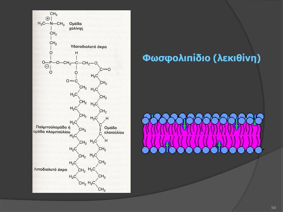 50 Φωσφολιπίδιο (λεκιθίνη)