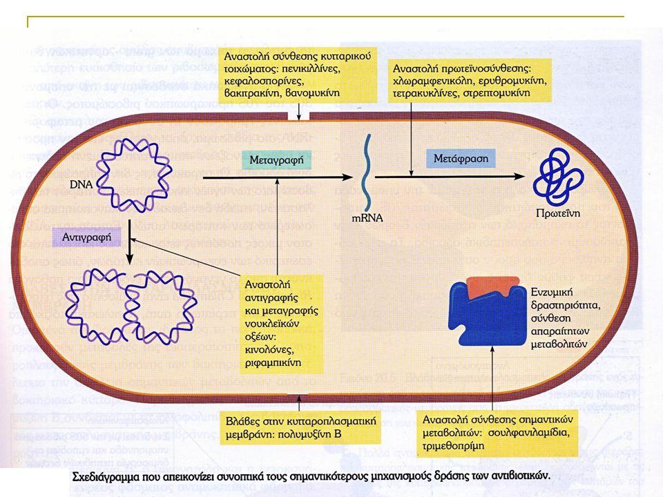 Στόχοι δράσης των αντιβιοτικών Σύνθεση Κυτταρικού τοιχώματος Πολλαπλασιασμός βακτηριακού DNA Αντιμεταβολίτες Πρωτεϊνική σύνθεση (30S υπομονάδα) Πρωτεϊνική σύνθεση (50S υπομονάδα)