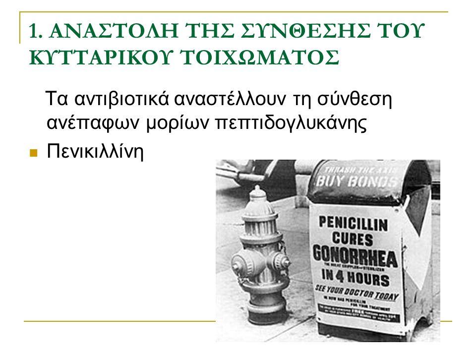 1. ΑΝΑΣΤΟΛΗ ΤΗΣ ΣΥΝΘΕΣΗΣ ΤΟΥ ΚΥΤΤΑΡΙΚΟΥ ΤΟΙΧΩΜΑΤΟΣ Τα αντιβιοτικά αναστέλλουν τη σύνθεση ανέπαφων μορίων πεπτιδογλυκάνης Πενικιλλίνη