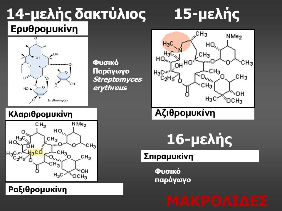 14-μελής δακτύλιος Ερυθρομυκίνη Κλαριθρομυκίνη 15-μελής Αζιθρομυκίνη Ροξιθρομυκίνη 16-μελής Σπιραμυκίνη Φυσικό Παράγωγο Streptomyces erythreus Φυσικό παράγωγο ΜΑΚΡΟΛΙΔΕΣ