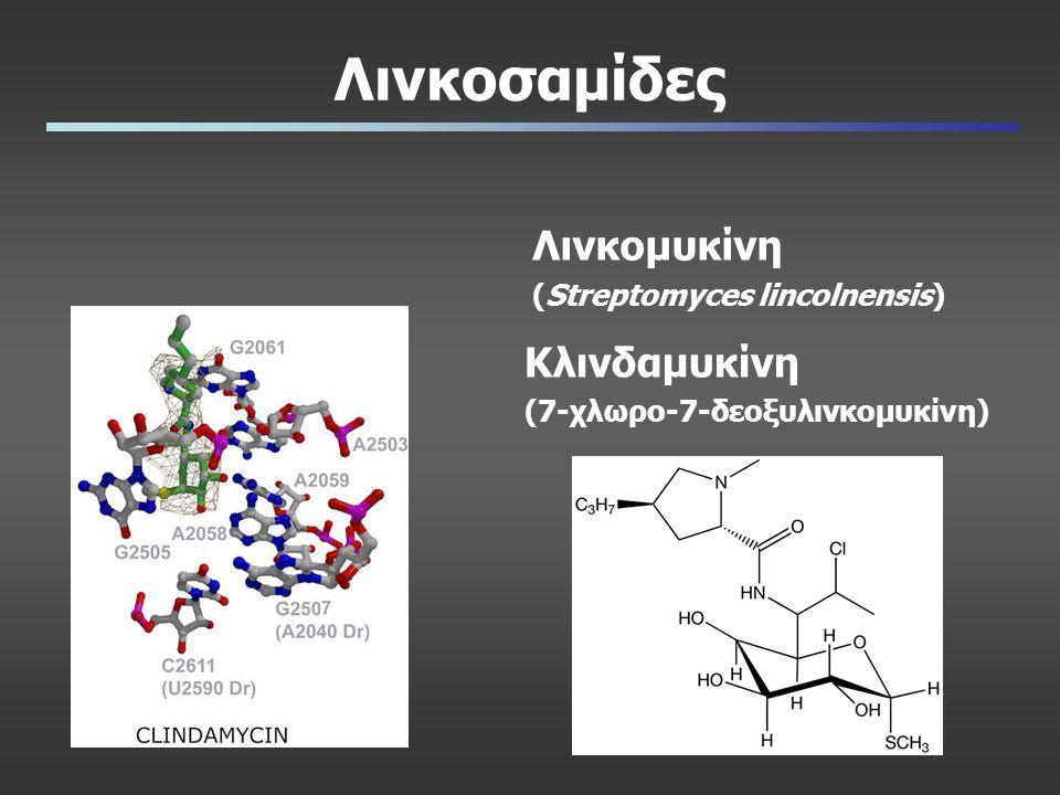 Λινκοσαμίδες Λινκομυκίνη (Streptomyces lincolnensis) Κλινδαμυκίνη (7-χλωρο-7-δεοξυλινκομυκίνη)