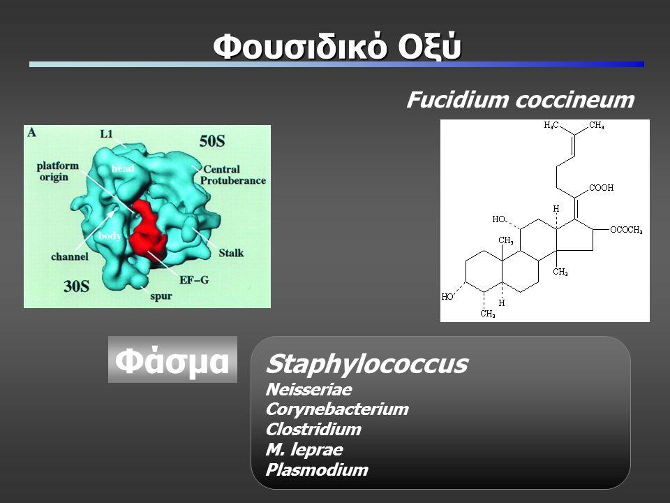 Φουσιδικό Οξύ Fucidium coccineum Φάσμα Staphylococcus Neisseriae Corynebacterium Clostridium M.