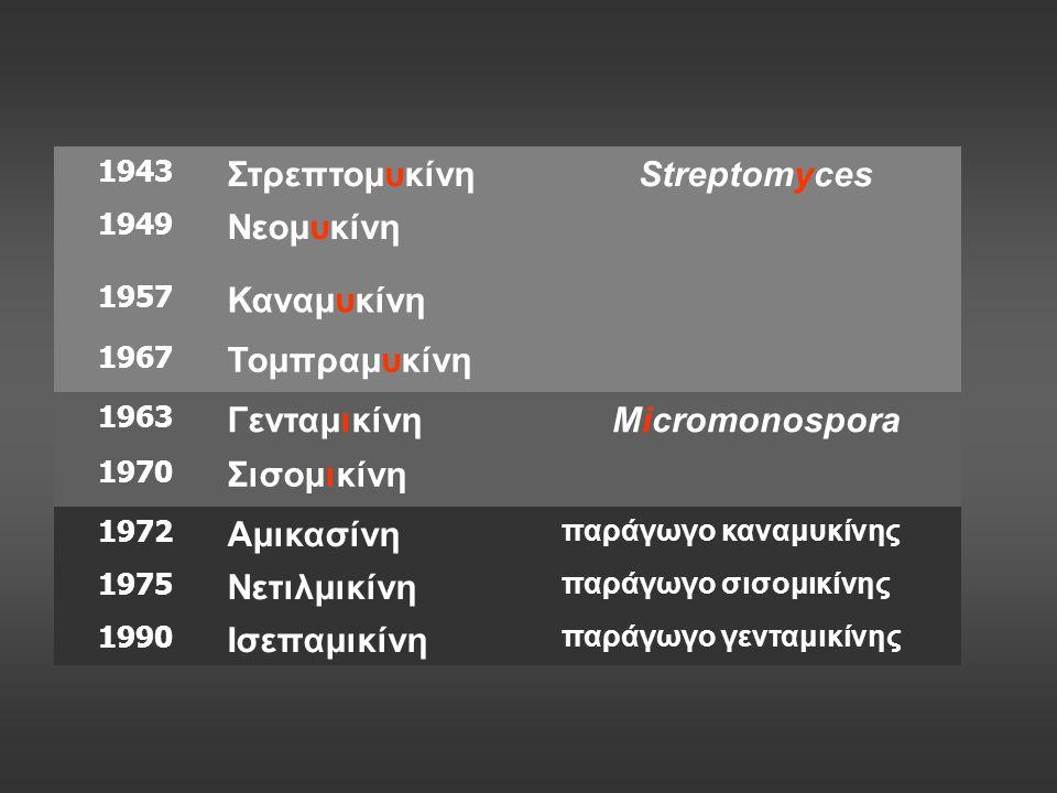 1943 ΣτρεπτομυκίνηStreptomyces 1949 Νεομυκίνη 1957 Καναμυκίνη 1967 Τομπραμυκίνη 1963 ΓενταμικίνηMicromonospora 1970 Σισομικίνη 1972 Αμικασίνη παράγωγο καναμυκίνης 1975 Νετιλμικίνη παράγωγο σισομικίνης 1990 Ισεπαμικίνη παράγωγο γενταμικίνης