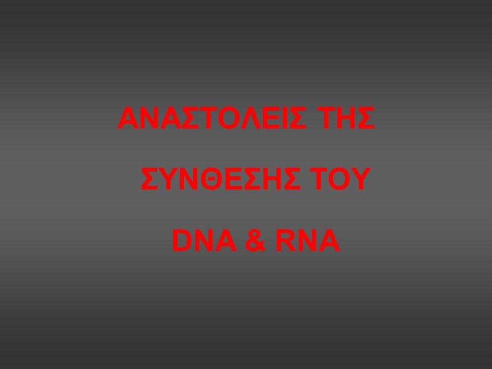 ΑΝΑΣΤΟΛΕΙΣ ΤΗΣ ΣΥΝΘΕΣΗΣ ΤΟΥ DNA & RNA