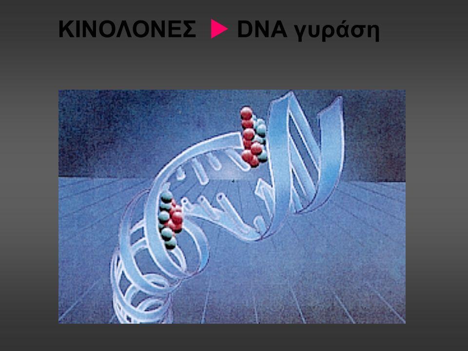 ΚΙΝΟΛΟΝΕΣ  DNA γυράση