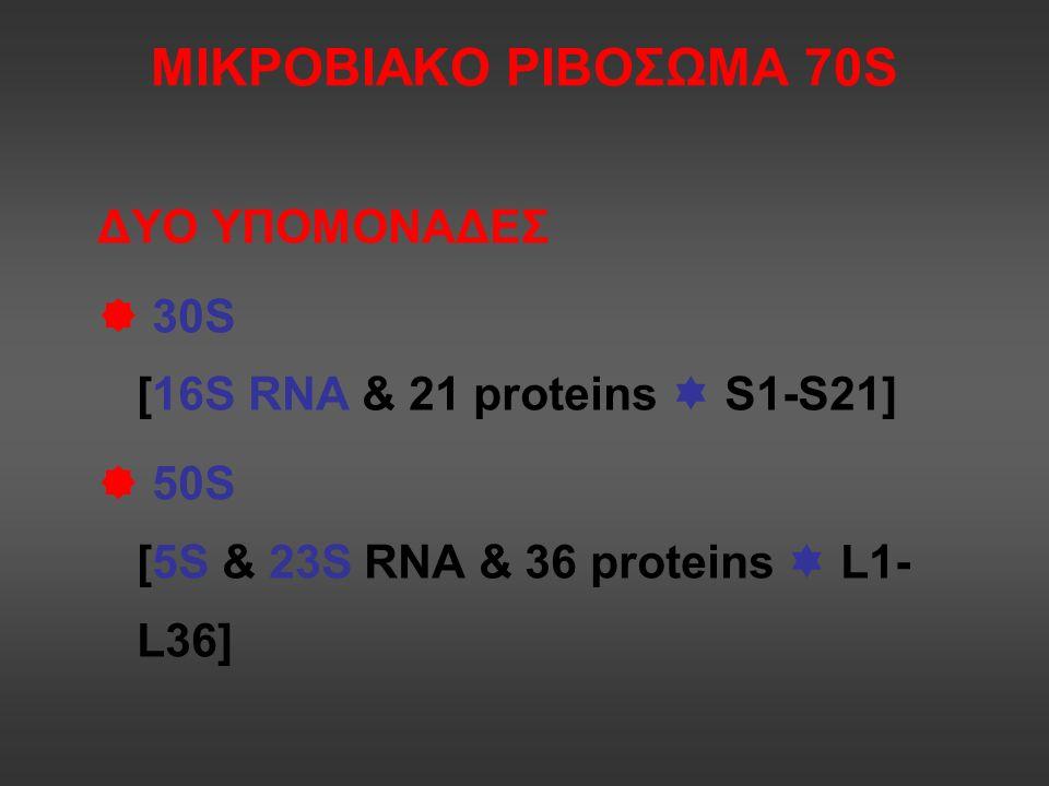 Στρεπτογραμίνες: ομάδες Α και Β Quinuprtistin Dalfopristin Μίγμα 30:70 Συνέργεια: 8-16 φορές > δραστικότητα Βακτηριοκτόνος δράση PAE Χορήγηση ΚΦΓ Περιορισμένη κλινική χρήση, λόγω παρενεργειών