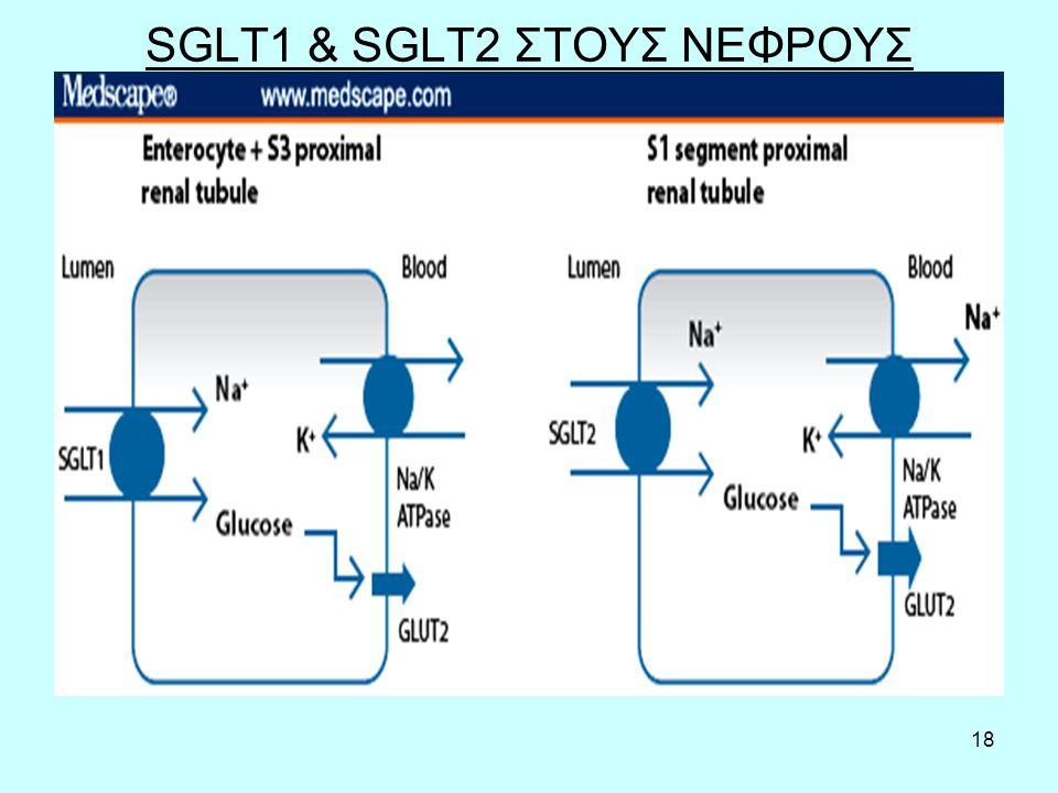18 SGLT1 & SGLT2 ΣΤΟΥΣ ΝΕΦΡΟΥΣ