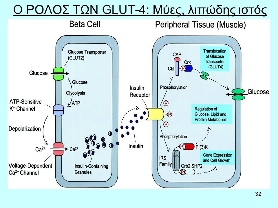 32 Ο ΡΟΛΟΣ ΤΩΝ GLUT-4: Μύες, λιπώδης ιστός