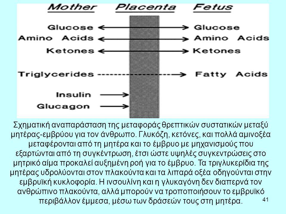 41 Σχηματική αναπαράσταση της μεταφοράς θρεπτικών συστατικών μεταξύ μητέρας-εμβρύου για τον άνθρωπο.