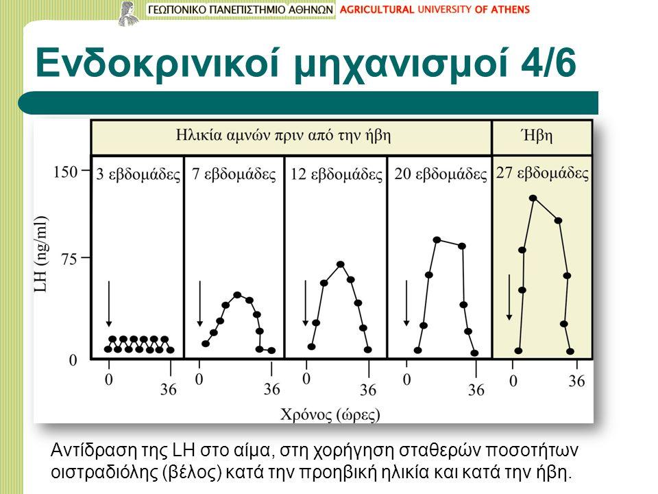 Ενδοκρινικοί μηχανισμοί 4/6 Αντίδραση της LH στο αίμα, στη χορήγηση σταθερών ποσοτήτων οιστραδιόλης (βέλος) κατά την προηβική ηλικία και κατά την ήβη.
