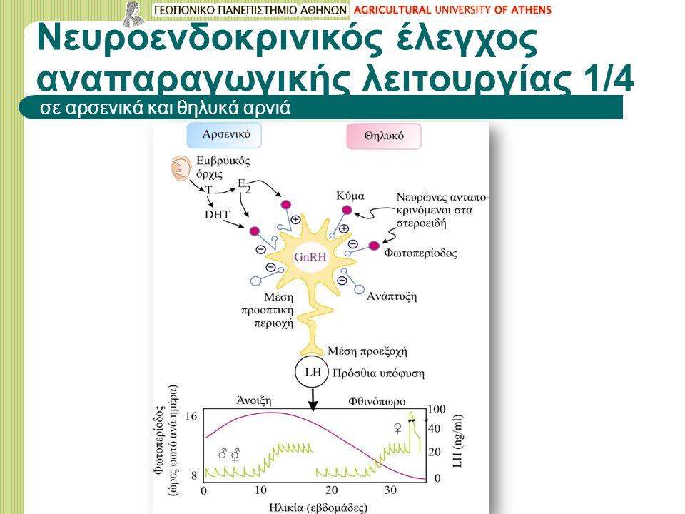Νευροενδοκρινικός έλεγχος αναπαραγωγικής λειτουργίας 1/4 σε αρσενικά και θηλυκά αρνιά