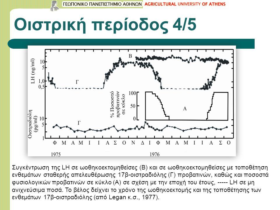 Οιστρική περίοδος 4/5 Συγκέντρωση της LH σε ωοθηκοεκτομηθείσες (Β) και σε ωοθηκοεκτομηθείσες με τοποθέτηση ενθεμάτων σταθερής απελευθέρωσης 17β-οιστραδιόλης (Γ) προβατινών, καθώς και ποσοστά φυσιολογικών προβατινών σε κύκλο (Α) σε σχέση με την εποχή του έτους, ----- LH σε μη ανιχνεύσιμα ποσά.