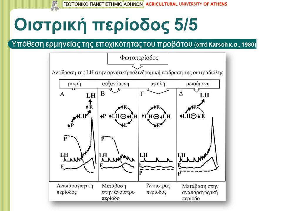 Οιστρική περίοδος 5/5 Υπόθεση ερμηνείας της εποχικότητας του προβάτου ( από Karsch κ.σ., 1980).