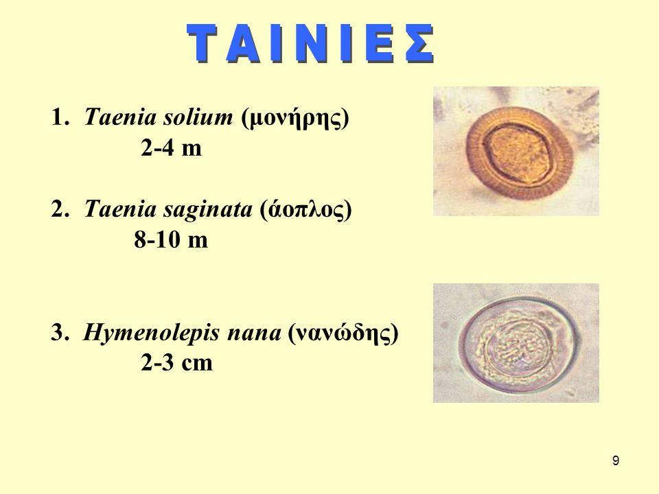 9 1. Τaenia solium (μονήρης) 2-4 m 2. Τaenia saginata (άοπλος) 8-10 m 3. Hymenolepis nana (νανώδης) 2-3 cm