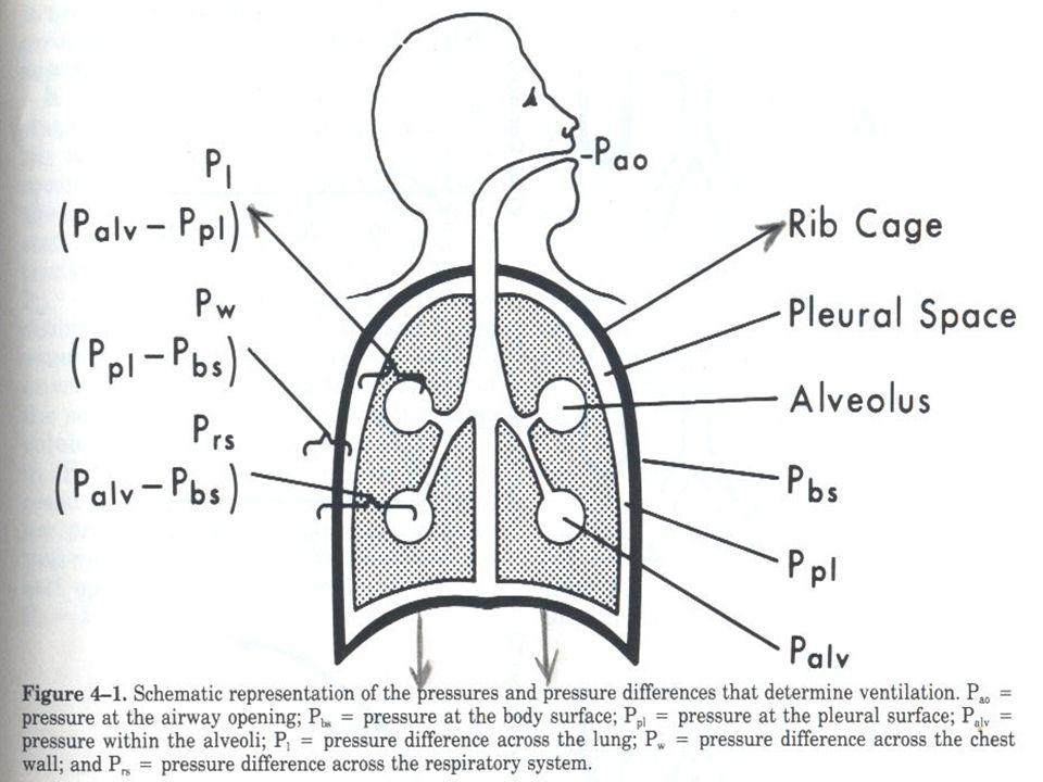 ΣΤΟΝ ΑΣΘΕΝΗ ΜΑΣ: Αναπτύσσεται ινώδης ιστός στον διάμεσο χώρο- ΑΡΑ: Περιορίζεται η έκπτυξη των κυψελίδων- ΑΡΑ: Απαιτείται μεγαλύτερη μεταβολή της περί την κυψελίδα πίεσης(P), ώστε να μπορέσει να εισέλθει ο όγκος αέρα που χρειάζεται (V)- (ιδιαίτερα στην κόπωση, όπου ο V αυξάνεται)