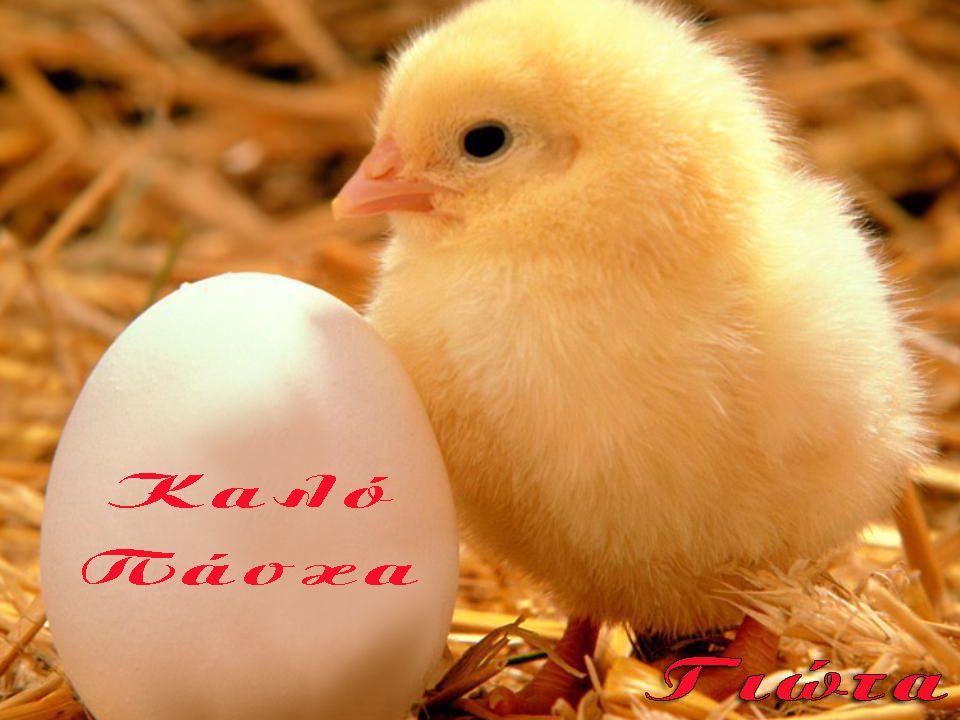 Εορτολόγιο Την ημέρα του Πάσχα, σύμφωνα με το ελληνικό/ορθόδοξο εορτολόγιο, γιορτάζουν αρκετά ελληνικά ονόματα: ο ΑΝΑΣΤΑΣΙΟΣ, ο ΑΝΕΣΤΗΣ, ο ΛΑΜΠΡΟΣ, η ΠΑΣΧΑΛΙΝΑ και ο ΠΑΣΧΑΛΗΣ, ο ΣΤΑΣΙΝΟΣ.