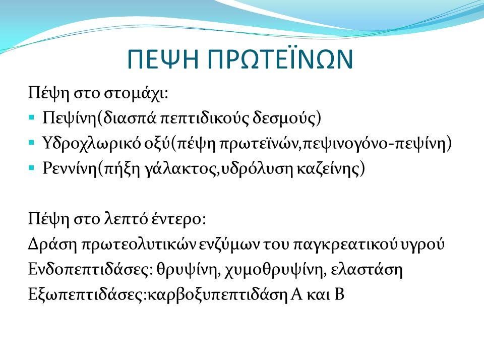 ΠΕΨΗ ΠΡΩΤΕΪΝΩΝ Πέψη στο στομάχι:  Πεψίνη(διασπά πεπτιδικούς δεσμούς)  Υδροχλωρικό οξύ(πέψη πρωτεϊνών,πεψινογόνο-πεψίνη)  Ρεννίνη(πήξη γάλακτος,υδρόλυση καζείνης) Πέψη στο λεπτό έντερο: Δράση πρωτεολυτικών ενζύμων του παγκρεατικού υγρού Ενδοπεπτιδάσες: θρυψίνη, χυμοθρυψίνη, ελαστάση Εξωπεπτιδάσες:καρβοξυπεπτιδάση Α και Β