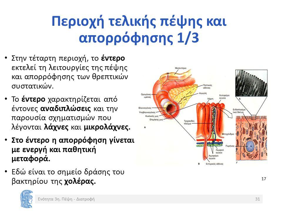 Περιοχή τελικής πέψης και απορρόφησης 1/3 Στην τέταρτη περιοχή, το έντερο εκτελεί τη λειτουργίες της πέψης και απορρόφησης των θρεπτικών συστατικών.