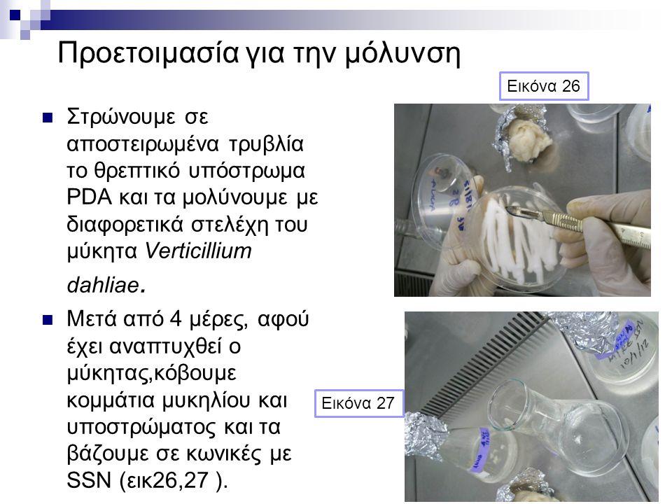 Προετοιμασία για την μόλυνση Στρώνουμε σε αποστειρωμένα τρυβλία το θρεπτικό υπόστρωμα PDA και τα μολύνουμε με διαφορετικά στελέχη του μύκητα Verticillium dahliae.