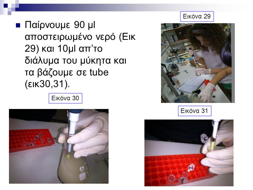 Παίρνουμε 90 μl αποστειρωμένο νερό (Εικ 29) και 10μl απ'το διάλυμα του μύκητα και τα βάζουμε σε tube (εικ30,31). Εικόνα 29 Εικόνα 30 Εικόνα 31