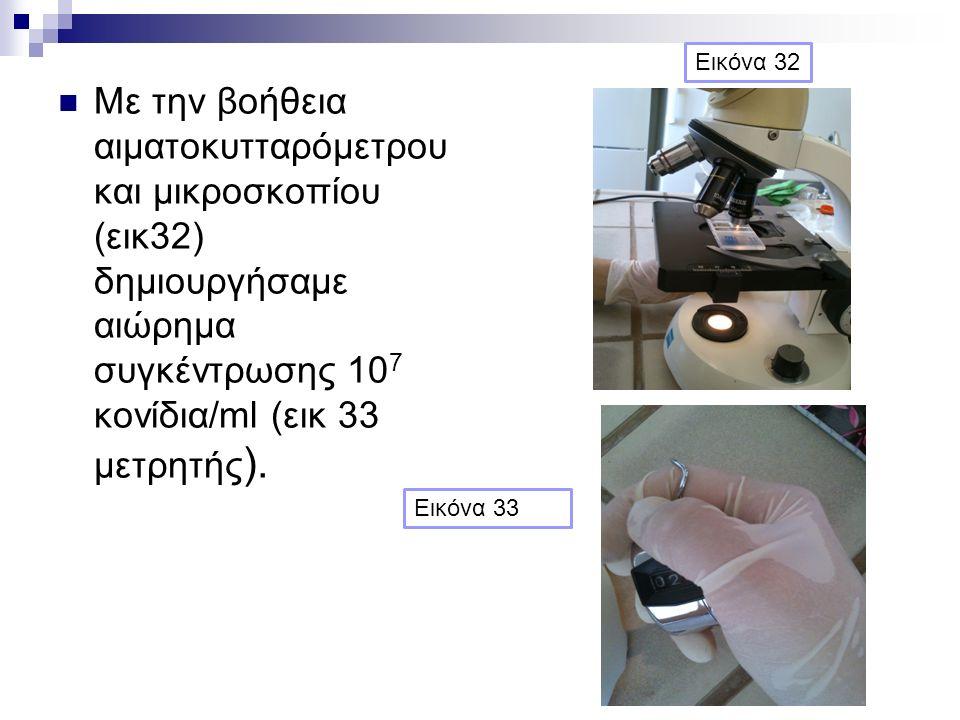 Με την βοήθεια αιματοκυτταρόμετρου και μικροσκοπίου (εικ32) δημιουργήσαμε αιώρημα συγκέντρωσης 10 7 κονίδια/ml (εικ 33 μετρητής ).