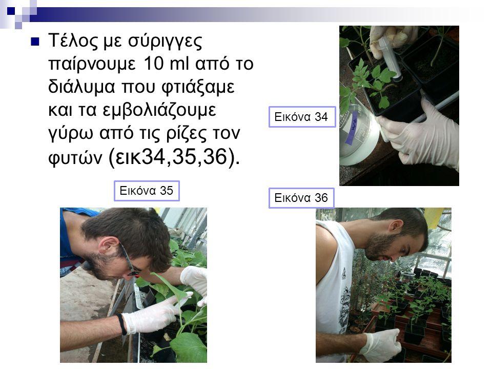 Τέλος με σύριγγες παίρνουμε 10 ml από το διάλυμα που φτιάξαμε και τα εμβολιάζουμε γύρω από τις ρίζες τον φυτών (εικ34,35,36).