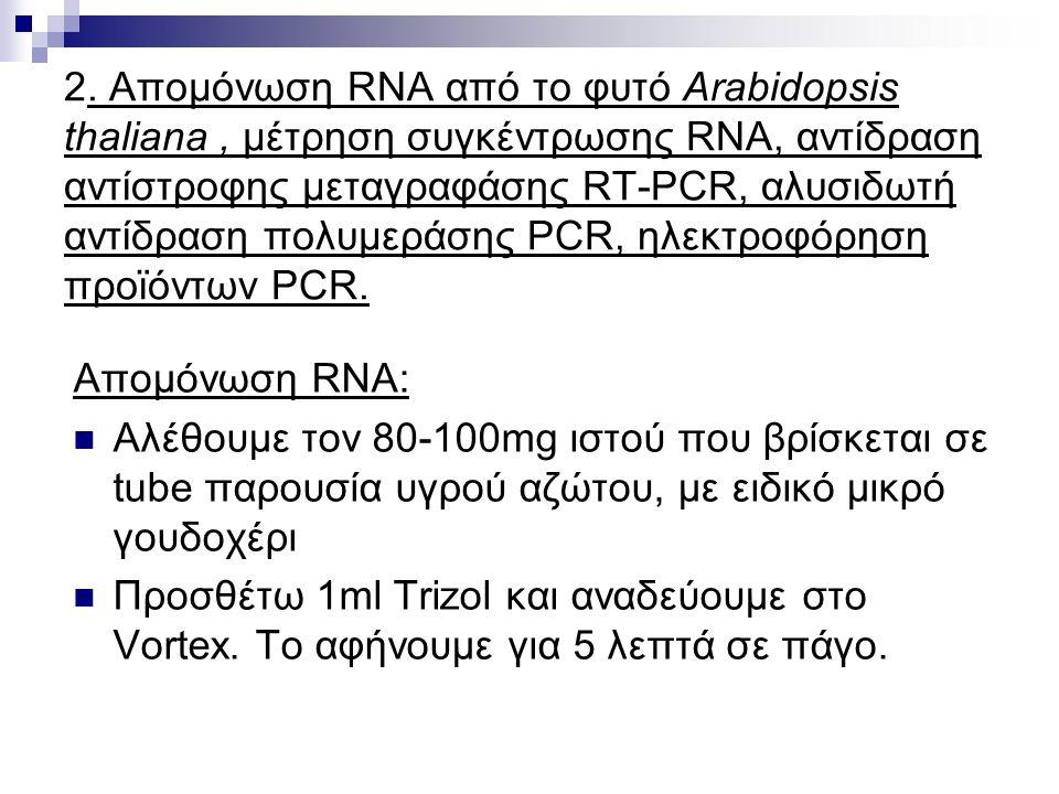 2. Απομόνωση RNA από το φυτό Arabidopsis thaliana, μέτρηση συγκέντρωσης RNA, αντίδραση αντίστρoφης μεταγραφάσης RT-PCR, αλυσιδωτή αντίδραση πολυμεράση