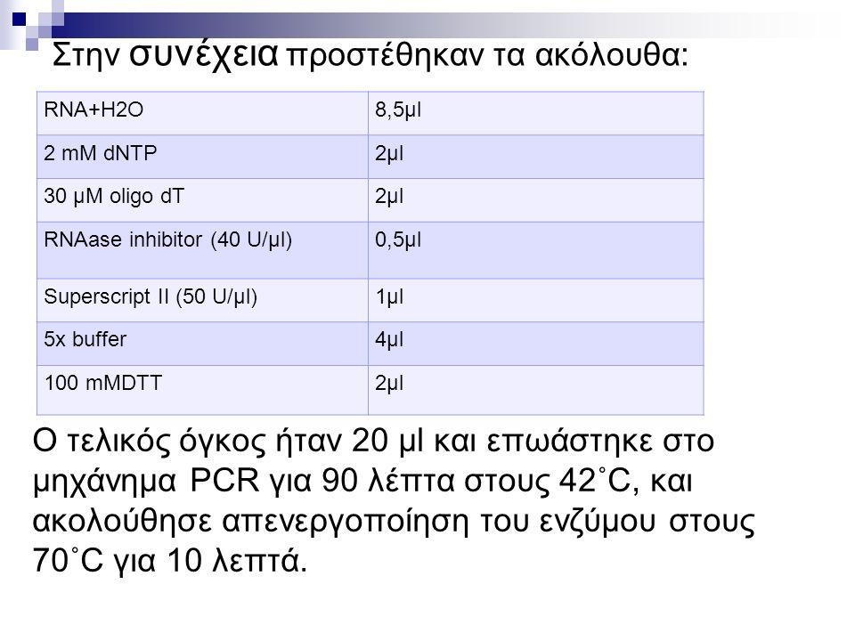 Στην συνέχεια προστέθηκαν τα ακόλουθα: RNA+H2O8,5μl 2 mM dNTP2μl2μl 30 μM oligo dT2μl2μl RNAase inhibitor (40 U/μl)0,5μl Superscript II (50 U/μl)1μl1μl 5x buffer4μl4μl 100 mMDTT2μl2μl Ο τελικός όγκος ήταν 20 μl και επωάστηκε στο μηχάνημα PCR για 90 λέπτα στους 42˚C, και ακολούθησε απενεργοποίηση του ενζύμου στους 70˚C για 10 λεπτά.
