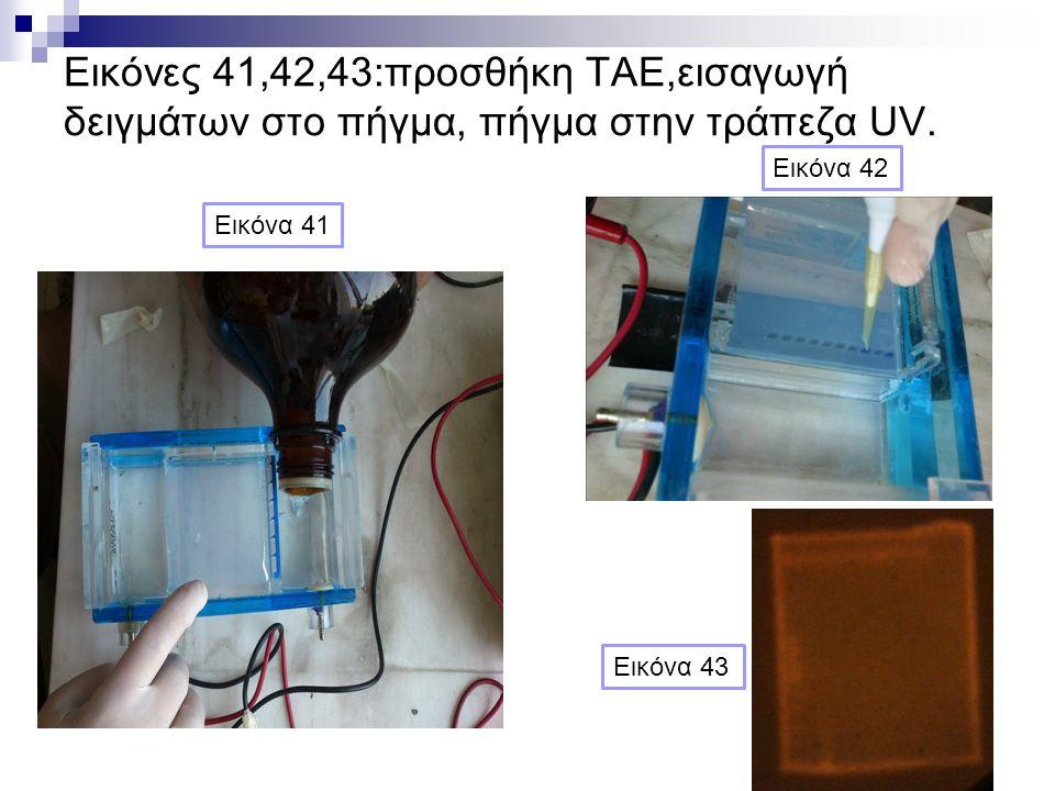 Εικόνες 41,42,43:προσθήκη ΤΑΕ,εισαγωγή δειγμάτων στο πήγμα, πήγμα στην τράπεζα UV. Εικόνα 41 Εικόνα 42 Εικόνα 43