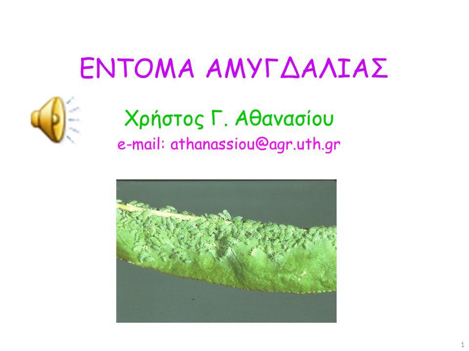 Πολυφάγο Ακμαίο 2-3 mm, καστανό Προνύμφη 3-5 mm, λευκή, ευκέφαλη, άποδη 2 γενιές, διαχειμάζει ως ανεπτυγμένη προνύμφη στην στοά της.