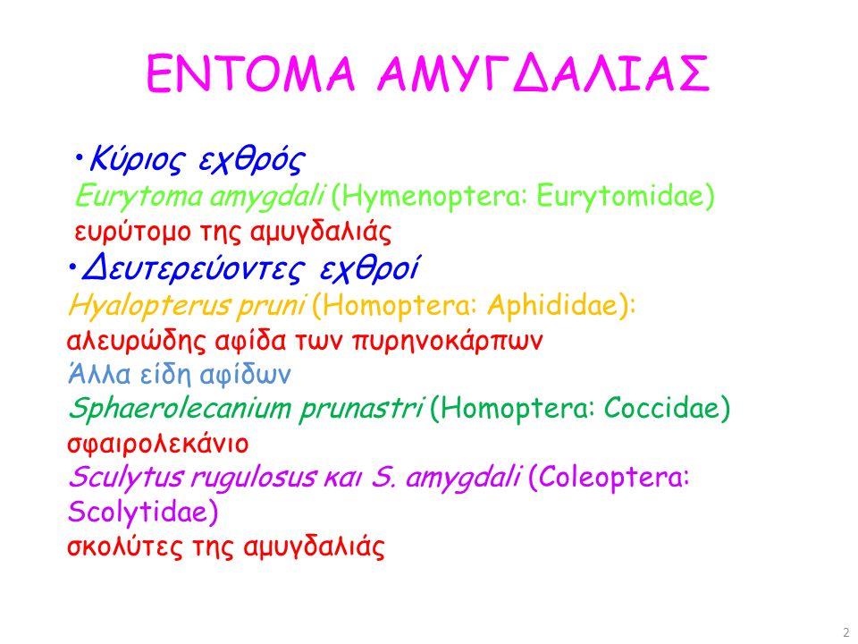 Eurytoma amygdali (Hymenoptera: Eurytomidae) ευρύτομο της αμυγδαλιάς Προσβάλλει μόνο την αμυγδαλιά Ακμαίο: 4-6 mm το άρρεν και 6-8 mm το θήλυ (με ωοθέτη), μαύρο γυαλιστερό, πτέρυγες διαφανείς με μια μικρή καστανή κηλίδα, Apocrita Προνύμφη: 5-7 mm, λευκή, άποδη (πάντα μέσα στο αμύγδαλο) Μια γενεά ανά έτος (ποσοστό του πληθυσμού 1 γενεά/2-3 έτη) 3