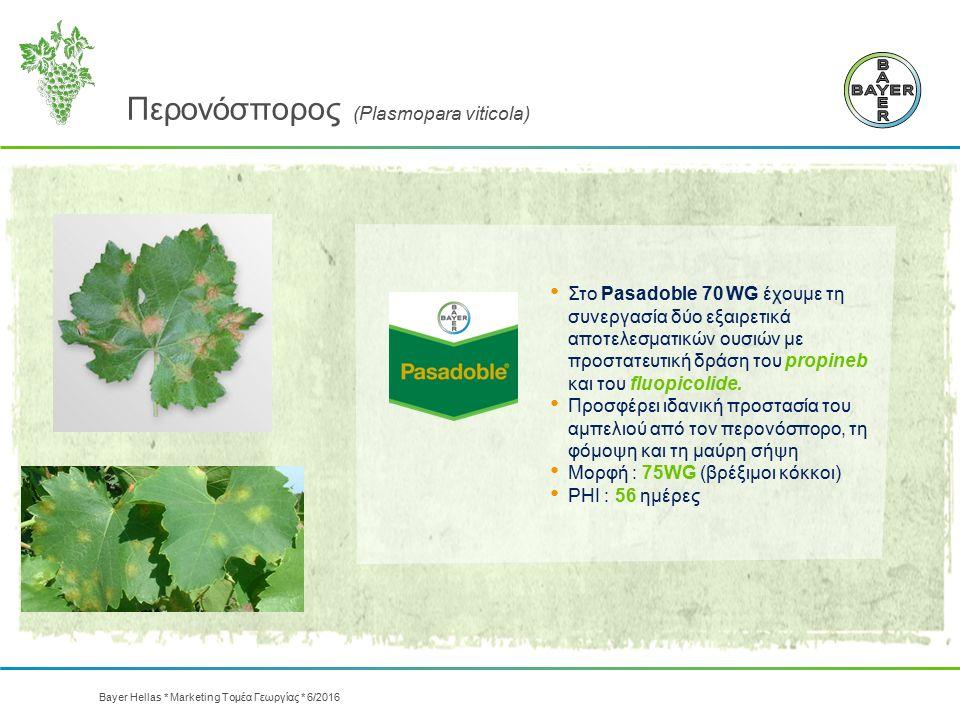 Περονόσπορος (Plasmopara viticola) Στo Pasadoble 70 WG έχουμε τη συνεργασία δύο εξαιρετικά αποτελεσματικών ουσιών με προστατευτική δράση του propineb