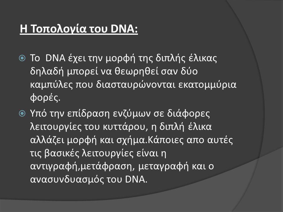 Η Τοπολογία του DNA:  Το DNA έχει την μορφή της διπλής έλικας δηλαδή μπορεί να θεωρηθεί σαν δύο καμπύλες που διασταυρώνονται εκατομμύρια φορές.  Υπό