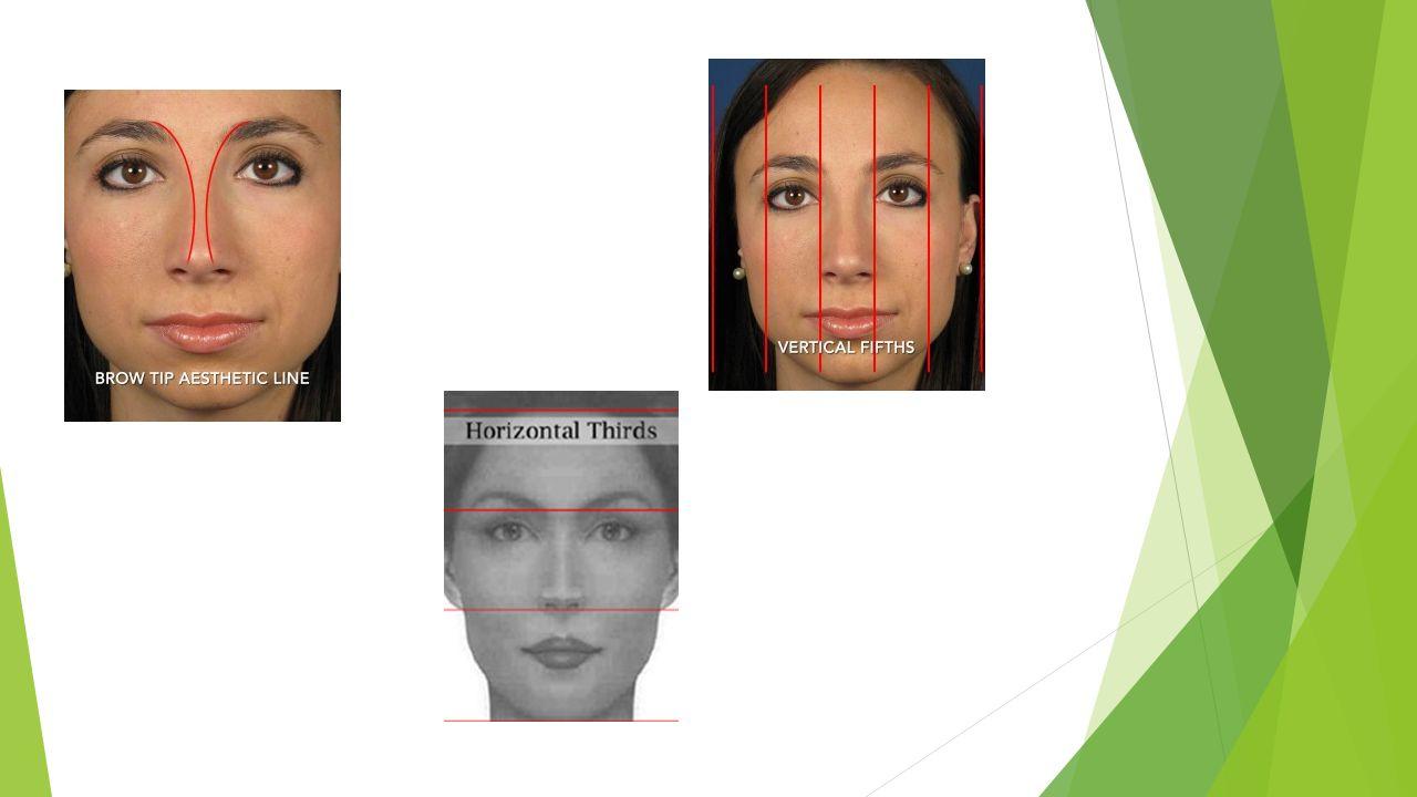 Ανατομία  Δέρμα  Μυς  Οστά  Χόνδρο  Βλεννογόνο