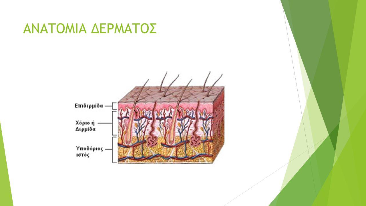 ΡΥΤΙΔΕΣ  Γήρανση: συνοδεύεται από χαλάρωση, λέπτυνση και ξήρανση του δέρματος  Το λίπος στα βαθύτερα στρώματα του δέρματος μειώνεται (ατροφία)  H ηλιακή ακτινοβολία  Oι εκφράσεις του προσώπου  H κληρονομικότητα  Tο κάπνισμα
