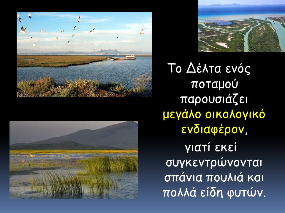 Το Δέλτα ενός ποταμού παρουσιάζει μεγάλο οικολογικό ενδιαφέρον, γιατί εκεί συγκεντρώνονται σπάνια πουλιά και πολλά είδη φυτών.
