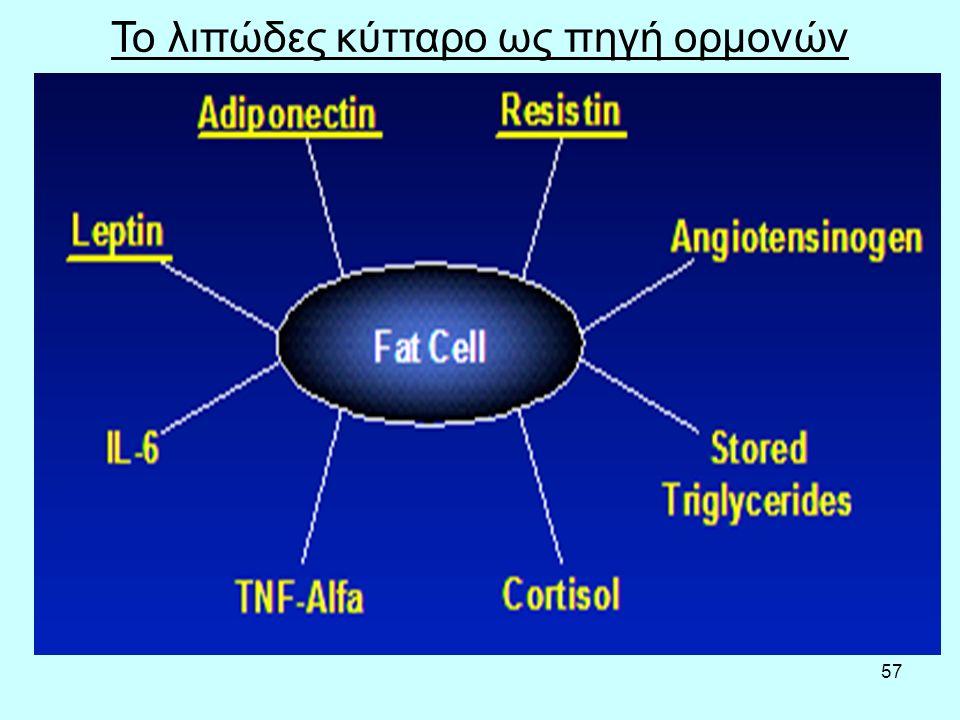 57 Το λιπώδες κύτταρο ως πηγή ορμονών