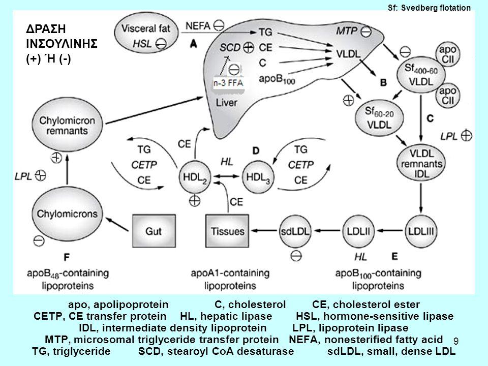 9 apo, apolipoproteinC, cholesterolCE, cholesterol ester CETP, CE transfer proteinHL, hepatic lipase HSL, hormone-sensitive lipase IDL, intermediate density lipoprotein LPL, lipoprotein lipase MTP, microsomal triglyceride transfer proteinNEFA, nonesterified fatty acid TG, triglyceride SCD, stearoyl CoA desaturase sdLDL, small, dense LDL ΔΡΑΣΗ ΙΝΣΟΥΛΙΝΗΣ (+) Ή (-) Sf: Svedberg flotation