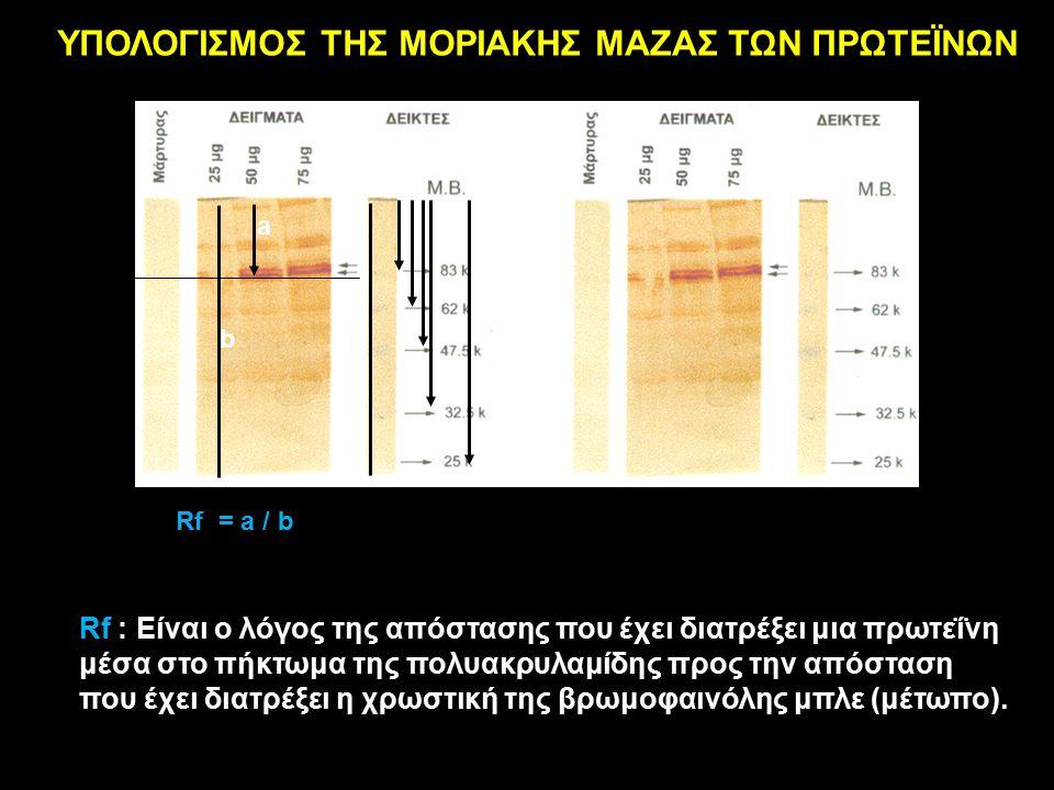 a b Rf = a / b b ΥΠΟΛΟΓΙΣΜΟΣ ΤΗΣ ΜΟΡΙΑΚΗΣ ΜΑΖΑΣ ΤΩΝ ΠΡΩΤΕΪΝΩΝ Rf : Είναι ο λόγος της απόστασης που έχει διατρέξει μια πρωτεΐνη μέσα στο πήκτωμα της πολυακρυλαμίδης προς την απόσταση που έχει διατρέξει η χρωστική της βρωμοφαινόλης μπλε (μέτωπο).