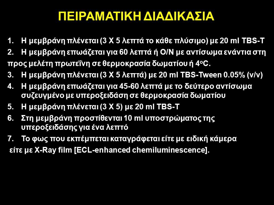 ΠΕΙΡΑΜΑΤΙΚΗ ΔΙΑΔΙΚΑΣΙΑ 1.Η μεμβράνη πλένεται (3 Χ 5 λεπτά το κάθε πλύσιμο) με 20 ml TBS-T 2.Η μεμβράνη επωάζεται για 60 λεπτά ή Ο/Ν με αντίσωμα ενάντια στη προς μελέτη πρωτεΐνη σε θερμοκρασία δωματίου ή 4 o C.